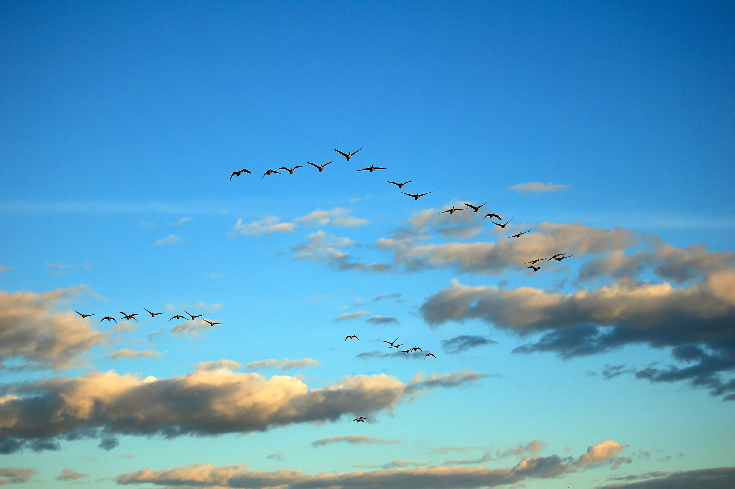 lessons from geese leadership followership team and trust a